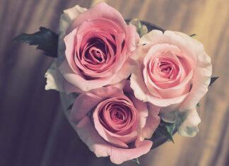 Różne rodzaje róż